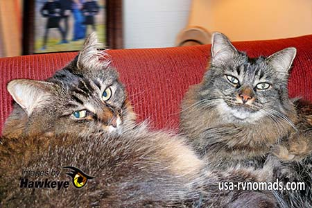 We cohabitate with our two cats, Emma and Ashley which makes RVing with your pets more enjoyable.