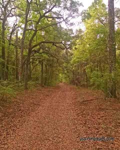Walking one of the nature trails at Otter Springs.