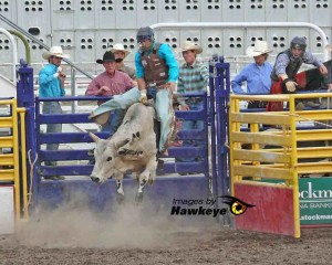 Bull riding in Missoula, MT.