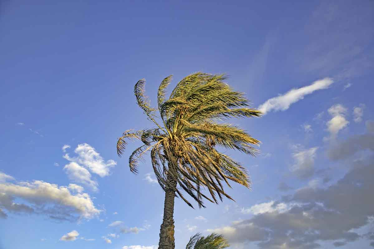 A palm tree sways in high winds, part of our RV Living Tips Series.