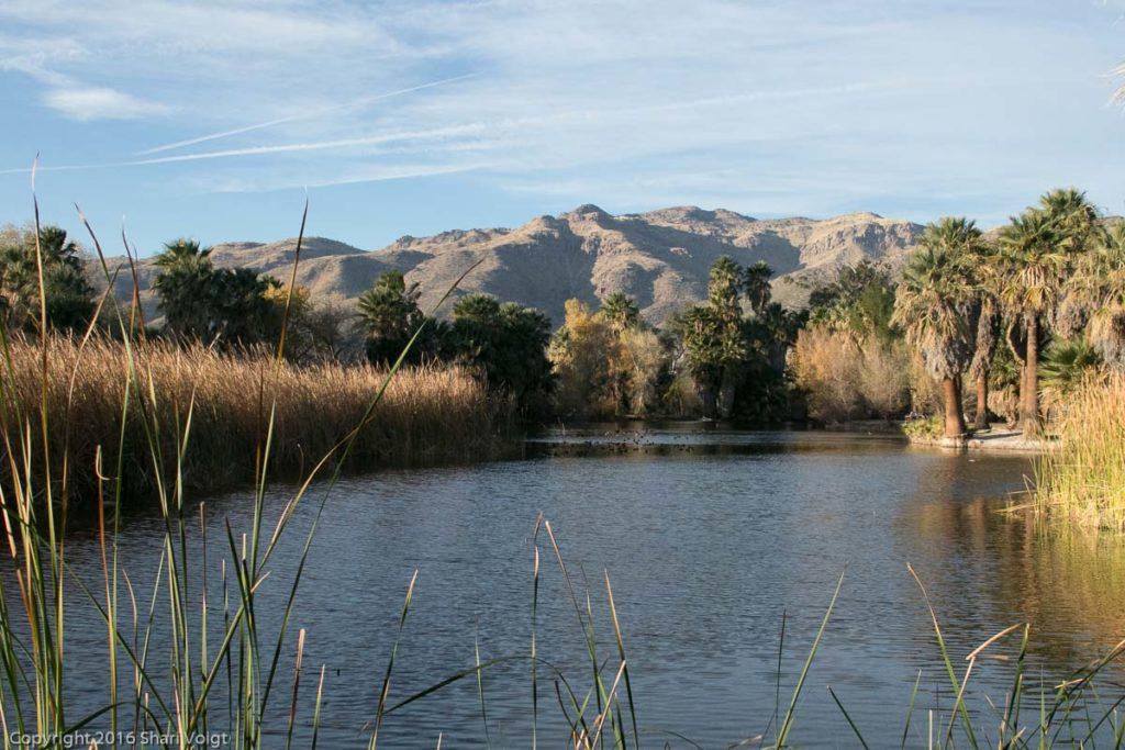Agua Caliente Park in Tucson, Arizona.