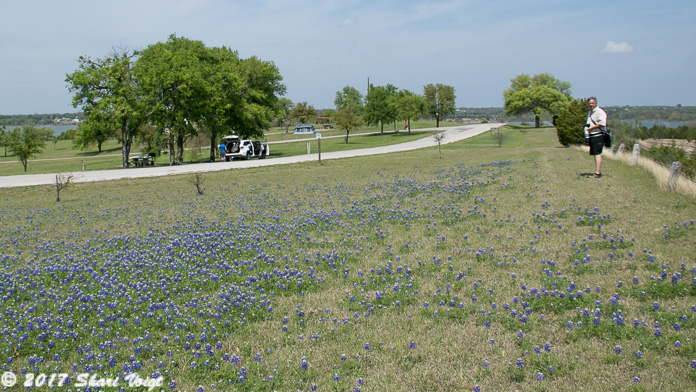 The Texas state flower is the Bluebonnet, and they're everywhere.