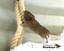 A mouse climbs a rope -how to keep mice out of an RV.